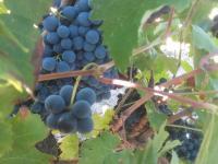Idée de Sortie Saint Cannat Domaine du Val Dernier