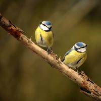 Evenement Coux Activité Dans la peau d'un bagueur à Terres d'Oiseaux
