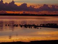 Evenement Guitinières Sortie crépusculaire à Terres d'Oiseaux