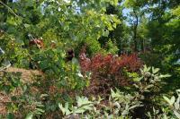Arborétum des Pouyouleix Dordogne