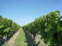 Idée de Sortie Saint Laurent des Vignes Boucle de la Fontaine - Saint Laurent des Vignes