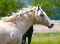 Idée de Sortie Ponteyraud Aux équins d'asthari Saint-Privat-des-Prés
