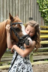 pony-2595144-1920 Saint Victor de Buthon