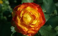 Le Vallon des Roses Pyrénées Atlantiques