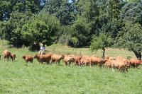 Idée de Sortie Haute Vienne Visite de producteurs : élevage de vaches limousines et chevaux