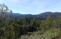 Idée de Sortie Var SAINT-ZACHARIE - La forêt du Défens par le pas de Peyruis