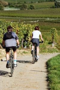 Idée de Sortie Saint Philippe du Seignal Location de vélos à assistance électrique