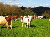 Idée de Sortie Sainte Nathalène Autours des produits laitiers à Sainte Nathalène