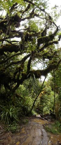 Idée de Sortie La Réunion Forêts de Bébour-Bélouve