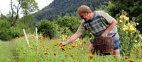 Idée de Sortie Sapois LA FERME AUX HERBES - PLANTES AROMATIQUES ET MEDICINALES