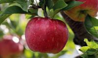 Idée de Sortie Germont SARL Aux Renaissances Paysannes 08-93 (fruits et légumes)