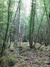 Evenement Limousin Concours photographique Toutes les nuances de rouge dans la forêt d'Épagne