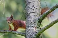 squirrel-5961986-960-720 Senonches