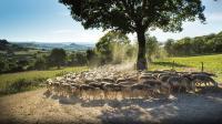 Evenement Laissac Visite de la ferme Seguin