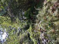 Idée de Sortie Saint Désiré L'Espace Naturel Sensible : « Le Moulin des Fougères »