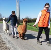 Idée de Sortie Watigny Jeux découvre la ferme en famille - La Croix-Colas