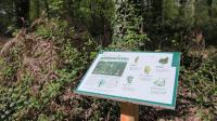 Bois de Thouars Gironde