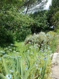Les jardins de Nigelle Landes