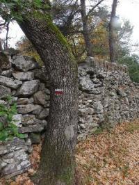 Idée de Sortie Trets Le sentier vigneron de Trets