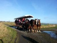 Evenement Mandeville en Bessin Balade en attelage Marais et patrimoine, au rythme des chevaux