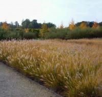 Idée de Sortie Loiret Le Jardin des Arbres