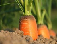 Magasin Picardie À la bonne ferme : ion et permaculture