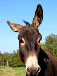 Idée de Sortie Blombay Un âne en Ardennes