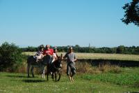 Idée de Sortie Châteauneuf sur Cher Balade nature avec un âne