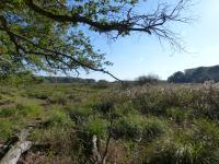 Le sentier du Marais du Gua Vensac