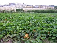 Idée de Sortie Versailles Potager du Roi