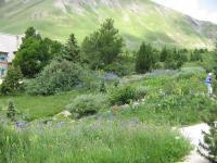 Idée de Sortie Hautes Alpes Jardin du Lautaret