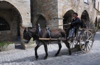 Evenement Anglars Saint Félix Calèches et cavaliers