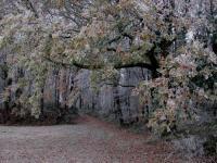 Idée de Sortie Margueron Saint-Léger, entre bois, vignes et vergers de pruniers