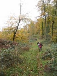 Evenement Saint Pierre Aigle Randonnée pédestre en forêt de Retz