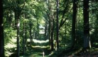 Evenement Saint Pierre Aigle Marche santé en forêt de Retz