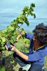 Idée de Sortie Gard Vinaigrerie Aigre Doux Sud Cévennes