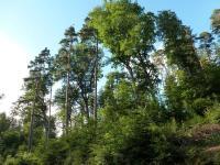 Idée de Sortie Alsace Circuit rando B14 : Le vallon du Netzenbach