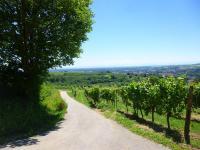 Idée de Sortie Alsace Circuit viticole sans frontière