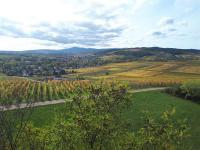 Idée de Sortie Alsace Sentier viticole de Wolxheim