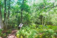 Idée de Sortie Landes Balade autour de l'Arboretum d'Ychoux