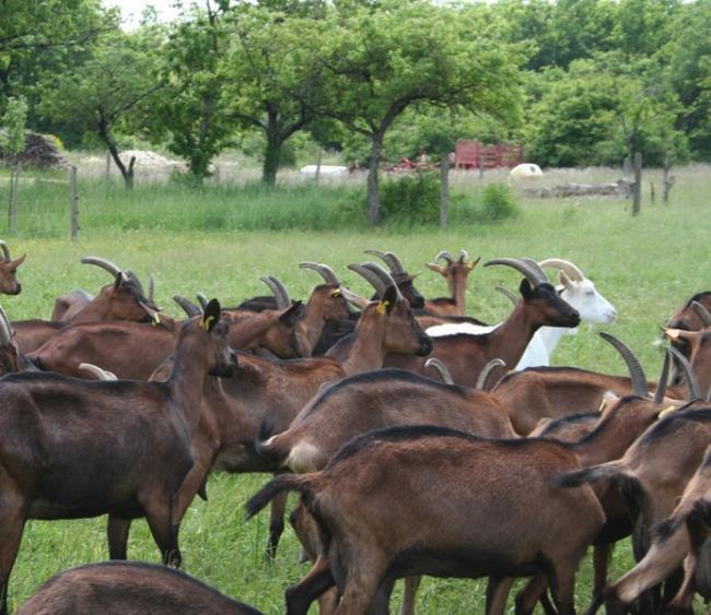 Ferme biologique du Grand Bois-Credit-ADTi