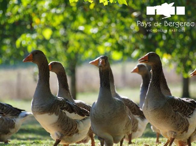 Ferme La Mondine-Credit-Pays-de-Bergerac-Tourisme