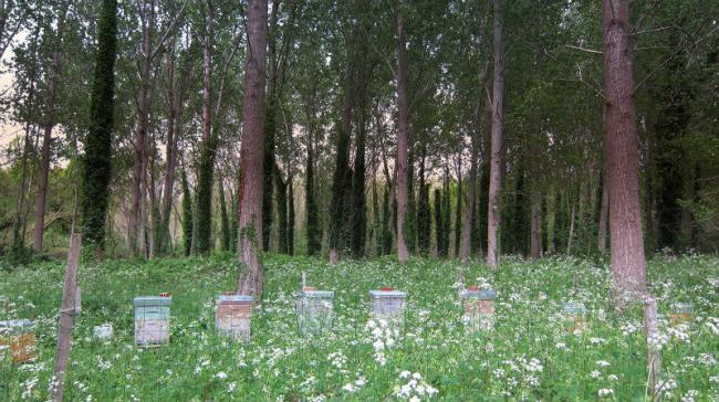 L'Abeille au Bois Dormant-Credit-Mr-Recalt