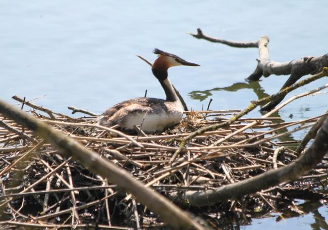 Le Festival de l'Oiseau et de la Nature : Les oiseaux de l'étang de Boué-Credit-Guenael-Hallart