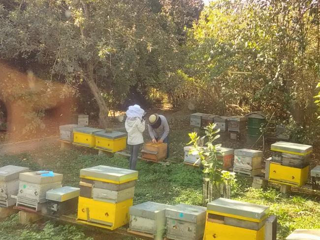 Fête du miel aux ateliers de l'Abeille-Credit-OT-Val-de-l-Aisne
