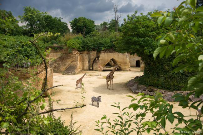 Bioparc - Zoo de Doué-la-Fontaine-Credit-Bioparc