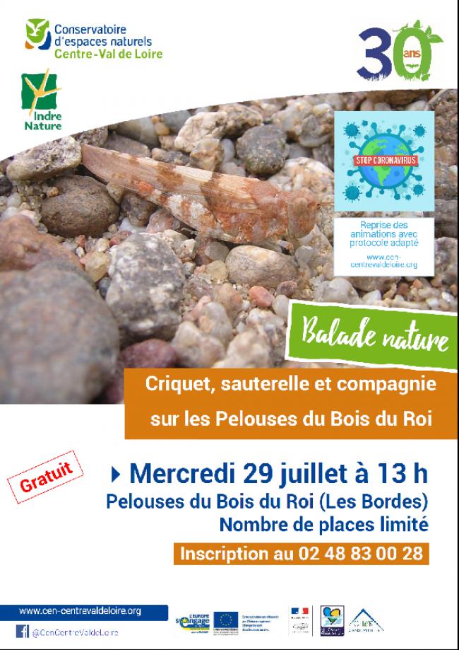 Découverte des criquets, grillons et sauterelles-Credit-Conservatoire-d-espaces-naturels-CEntre--Val-de-Loire