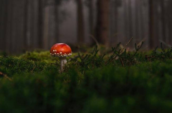 L'Espace Naturel Sensible : « Territoire des Places »-Credit-Pixabay
