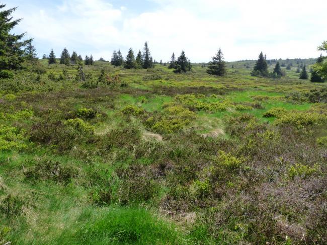 TANET GAZON DU FAING-Credit-Reserve-naturelle-du-Tanet-Gazon-du-Faing-1-Ji-Elle-https-commons-wikimedia-org-wiki-UserJi-Elle-CC-BY-SA-3-0