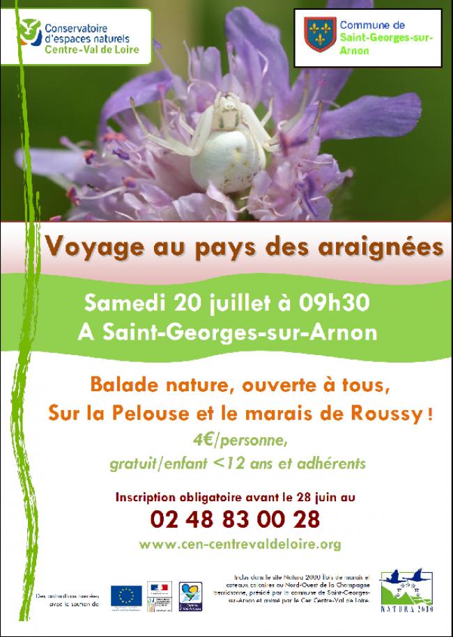 Voyage au pays des araignées sur la pelouse et le marais de Roussy-Credit-Conservatoire-d-Espaces-Naturesl-Centre-Val-de-Loire